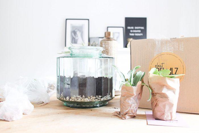 DIY-terrarium---Live-love-interior